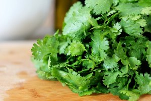 bunch-of-cilantro